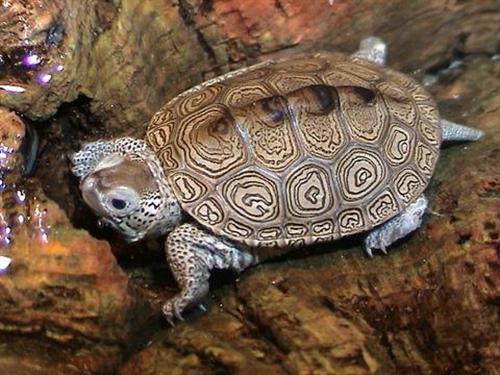 verdens ældste nulevende skildpadde