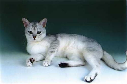 hårbolde kat